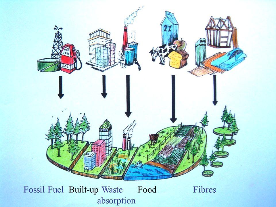 « Het is een maat voor de biologisch productieve oppervlakte van land en water die een individu, een stad, een land, een regio of de mensheid nodig heeft om de hulpbronnen die ze verbruikt te produceren en om het afval dat ze genereert te absorberen, gebruik makend van de huidige technologieën en systemen »