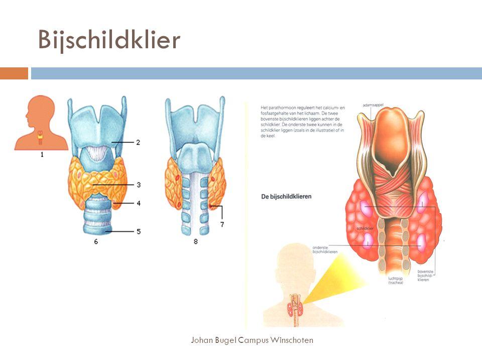 Johan Bugel Campus Winschoten Bijschildklier