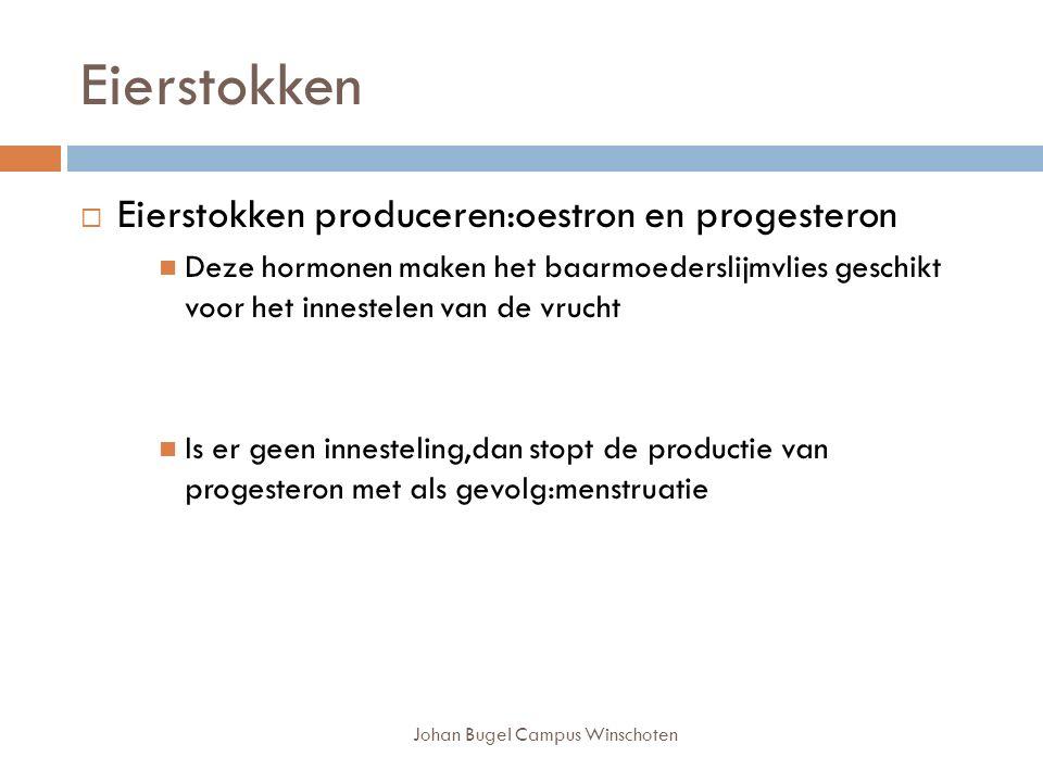 Johan Bugel Campus Winschoten Eierstokken  Eierstokken produceren:oestron en progesteron Deze hormonen maken het baarmoederslijmvlies geschikt voor het innestelen van de vrucht Is er geen innesteling,dan stopt de productie van progesteron met als gevolg:menstruatie