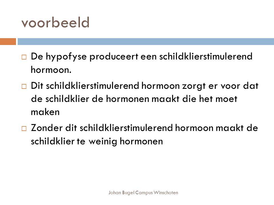 Johan Bugel Campus Winschoten voorbeeld  De hypofyse produceert een schildklierstimulerend hormoon.