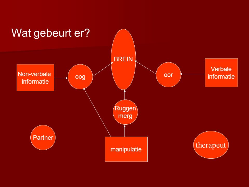 oog oor Ruggen merg BREIN Non-verbale informatie Verbale informatie manipulatie Partner Wat gebeurt er.