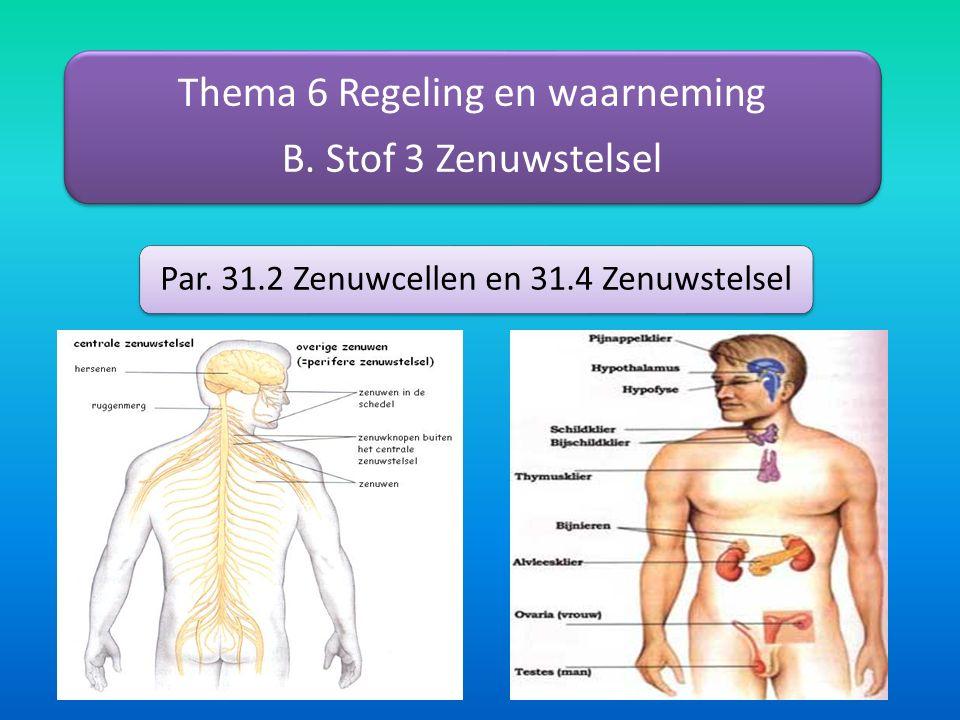 Thema 6 Regeling en waarneming B. Stof 3 Zenuwstelsel Par. 31.2 Zenuwcellen en 31.4 Zenuwstelsel