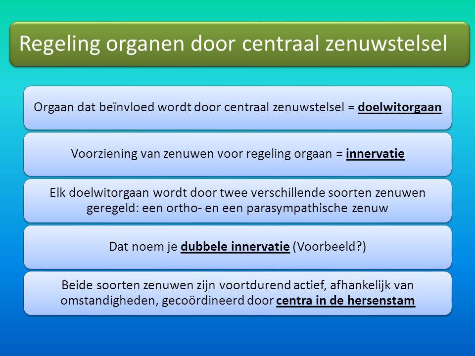 Regeling organen door centraal zenuwstelsel Orgaan dat beïnvloed wordt door centraal zenuwstelsel = doelwitorgaanVoorziening van zenuwen voor regeling orgaan = innervatie Elk doelwitorgaan wordt door twee verschillende soorten zenuwen geregeld: een ortho- en een parasympathische zenuw Dat noem je dubbele innervatie (Voorbeeld?) Beide soorten zenuwen zijn voortdurend actief, afhankelijk van omstandigheden, gecoördineerd door centra in de hersenstam