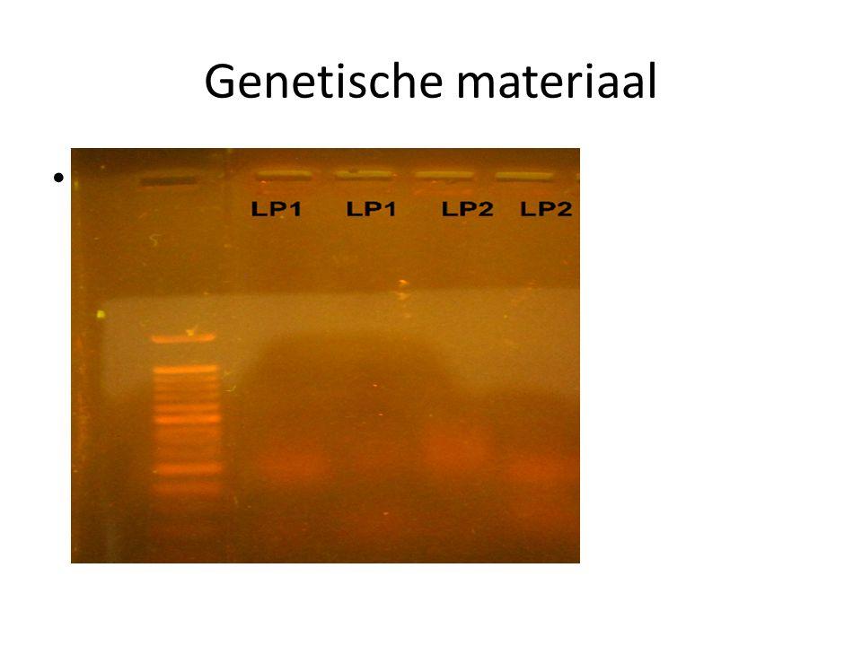 Genetische materiaal Primers – Forward primer : Lac16S-for AATGAGAGTTTGATCCTGGCT – Reverse primer : Lac16S-rev GAGGTGATCCAGCCGCAGGTT