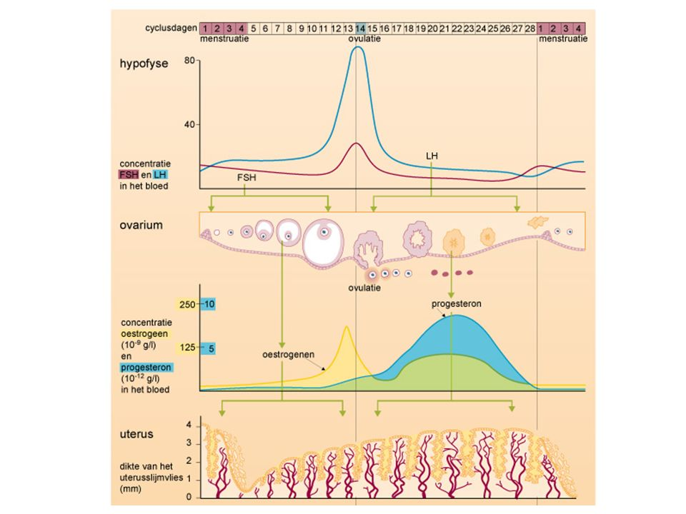 Referenties Management of Hypogonadism in Adolescent Girls and Adult Women With Prader–Willi Syndrome, Eldar- Geva, AJMG, 2013 The use of contraception by women with ID, JIDR, 2011 NVAVG Omgaan met vragen rondom kinderwens en anticonceptie NHG Standaard Anticonceptie Richtlijn Epilepsie NVN Leeronderzoek 2006 Menstruatieregulatie bij verstandelijk gehandicapte vrouwen Farmacotherapeutisch Kompas