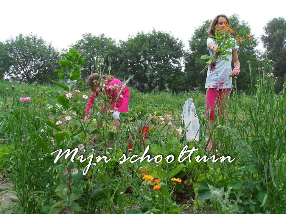 Mijn schooltuin