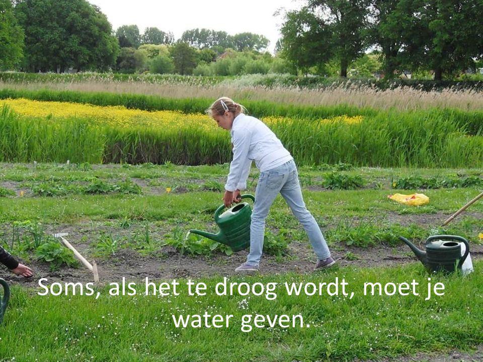 Soms, als het te droog wordt, moet je water geven.