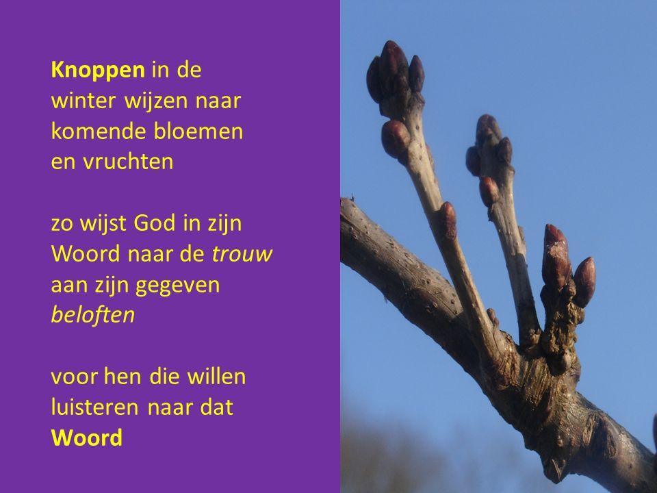 Knoppen in de winter wijzen naar komende bloemen en vruchten zo wijst God in zijn Woord naar de trouw aan zijn gegeven beloften voor hen die willen luisteren naar dat Woord