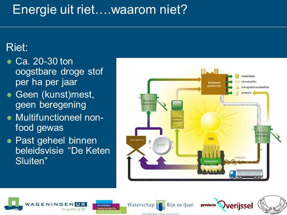 In opdracht van WRIJ, Lankheet & PRI -Energiepotentie riet - verwerking (balen, briketten etc) - verbrandingswaarde -warmtecentrale gekoppeld aan justitiële inrichting Rekken