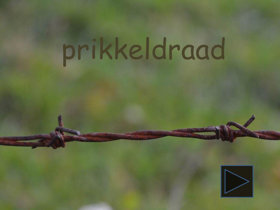 pieten gans roos deur aap Piet begint met de letter P.