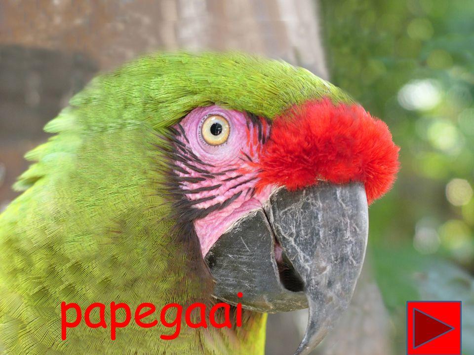 Piet begint met de letter P. Zie jij nog een woord dat met de letter P begint.