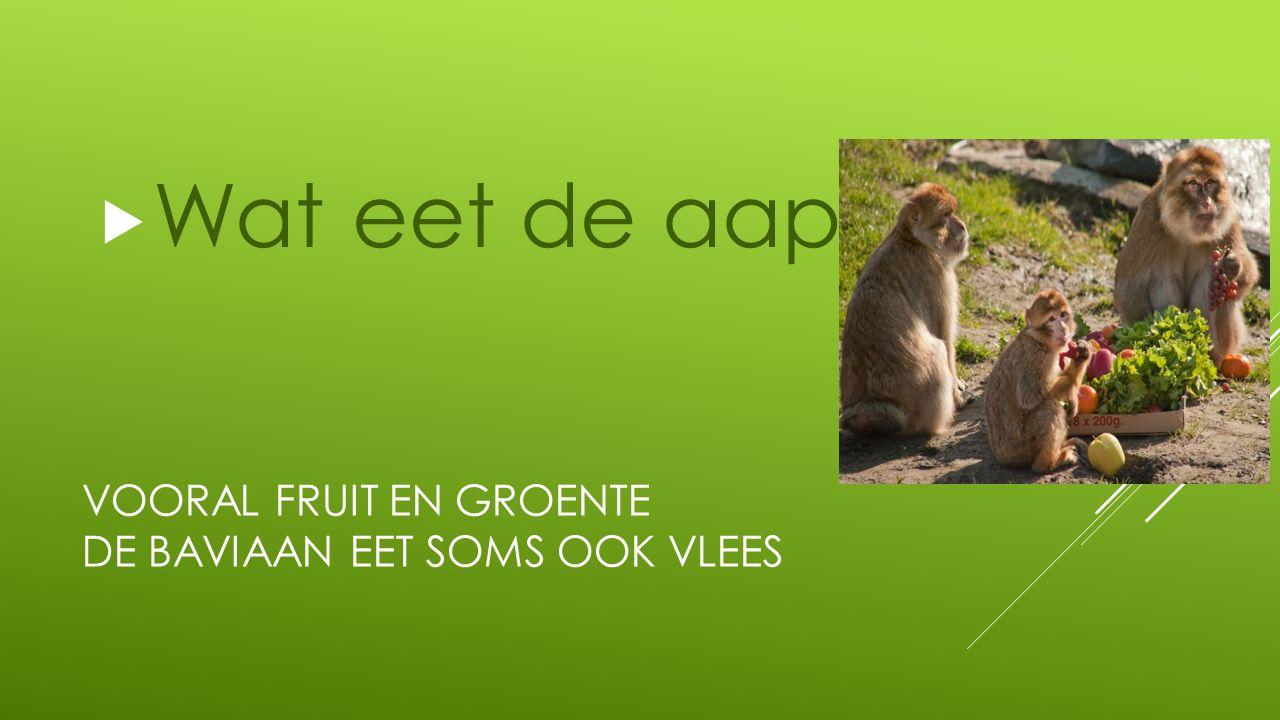 VOORAL FRUIT EN GROENTE DE BAVIAAN EET SOMS OOK VLEES  Wat eet de aap