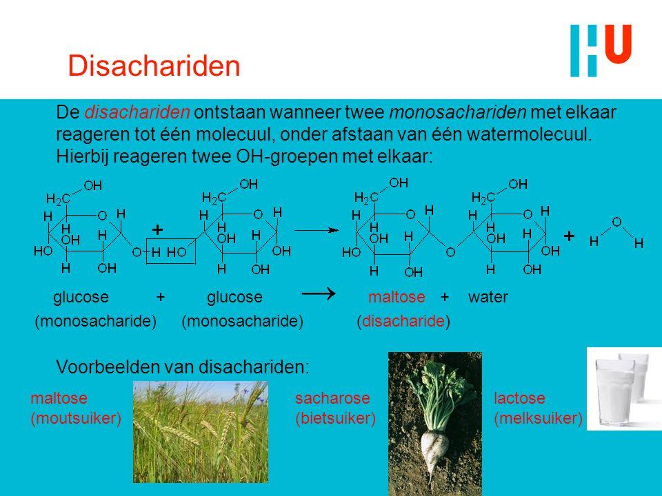 Disachariden De disachariden ontstaan wanneer twee monosachariden met elkaar reageren tot één molecuul, onder afstaan van één watermolecuul. Hierbij r