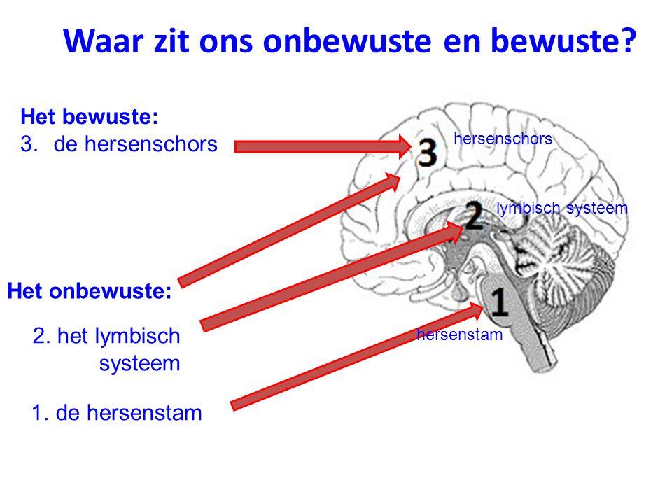 Waar zit ons onbewuste en bewuste? Het onbewuste: Het bewuste: 3.de hersenschors hersenschors lymbisch systeem 1. de hersenstam 2. het lymbisch systee