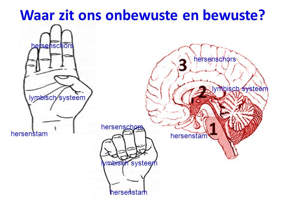 hersenschors lymbisch systeem hersenstam lymbisch systeem hersenschors hersenstam lymbisch systeem hersenschors Waar zit ons onbewuste en bewuste?