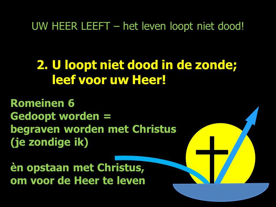 UW HEER LEEFT – het leven loopt niet dood! 2.U loopt niet dood in de zonde; leef voor uw Heer! Romeinen 6 Gedoopt worden = begraven worden met Christu