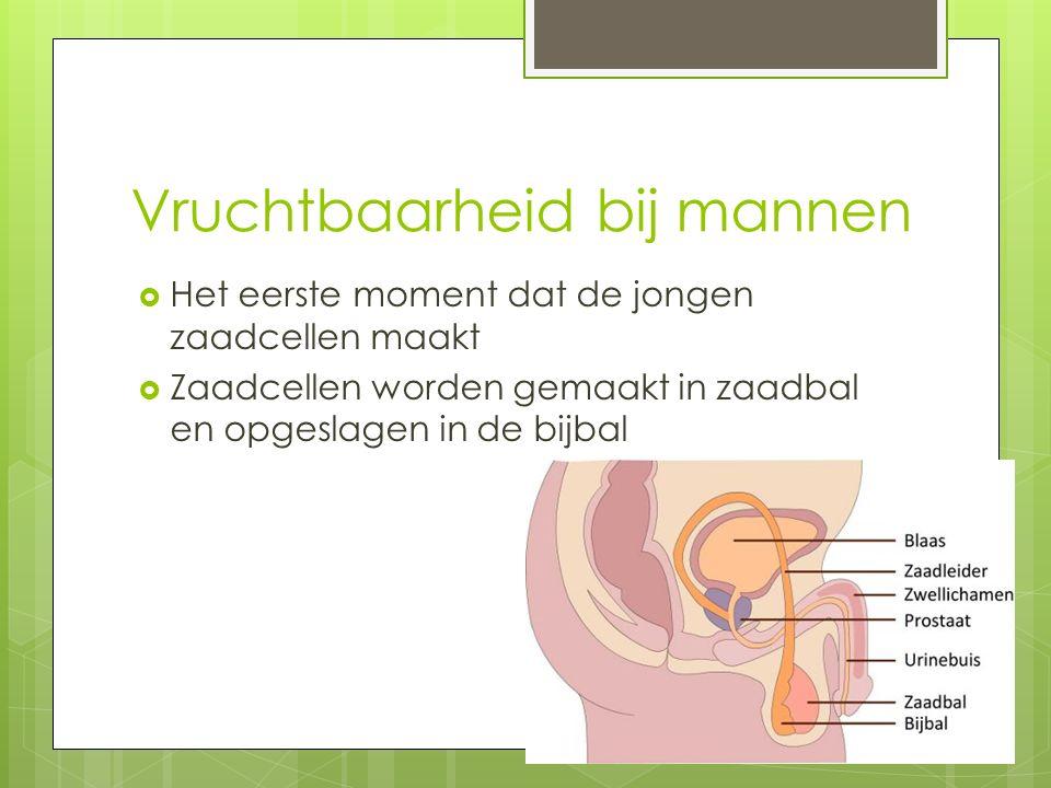 Vruchtbaarheid bij mannen  Het eerste moment dat de jongen zaadcellen maakt  Zaadcellen worden gemaakt in zaadbal en opgeslagen in de bijbal