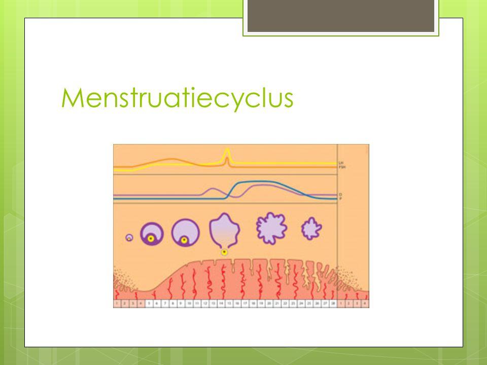 Abortus  Tussen 13 e week en 24 e week na de menstruatie  Medische ingreep van ongeveer 30 minuten