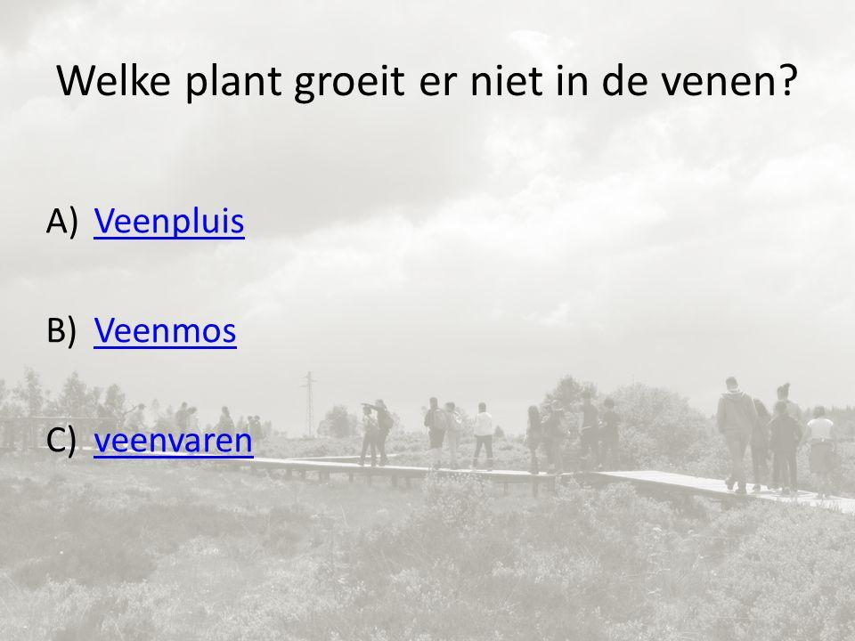 Welke plant groeit er niet in de venen A)VeenpluisVeenpluis B)VeenmosVeenmos C)veenvarenveenvaren