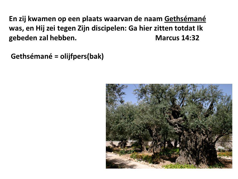 En zij kwamen op een plaats waarvan de naam Gethsémané was, en Hij zei tegen Zijn discipelen: Ga hier zitten totdat Ik gebeden zal hebben.