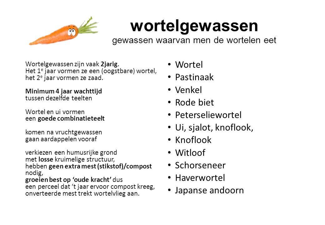 wortelgewassen gewassen waarvan men de wortelen eet Wortelgewassen zijn vaak 2jarig.