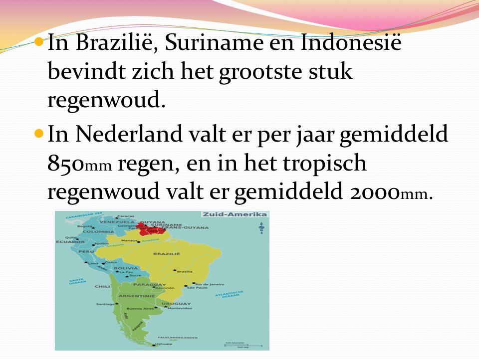 In Brazilië, Suriname en Indonesië bevindt zich het grootste stuk regenwoud. In Nederland valt er per jaar gemiddeld 850 mm regen, en in het tropisch