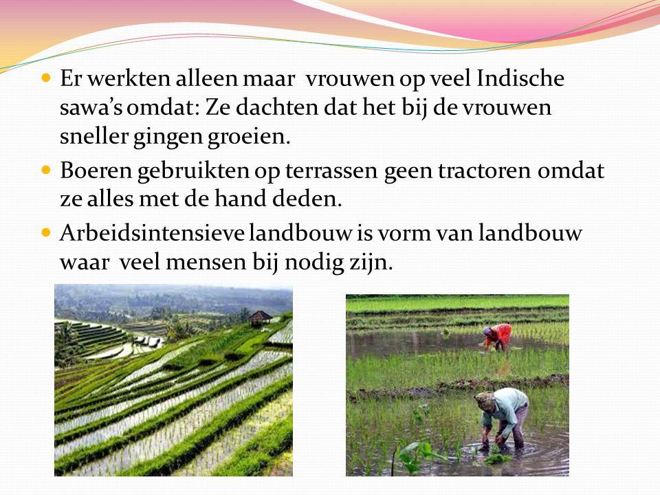 Onder de loep.In Indonesië is rijst het belangrijkst landbouwproduct.
