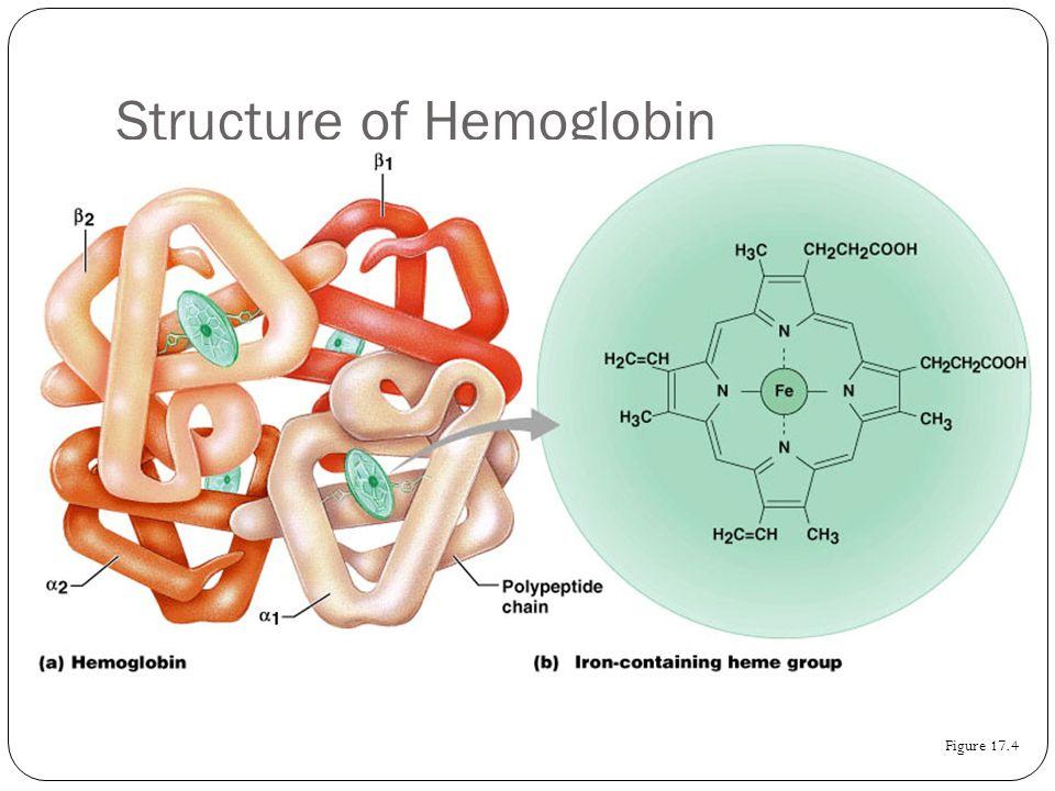 Structure of Hemoglobin Figure 17.4