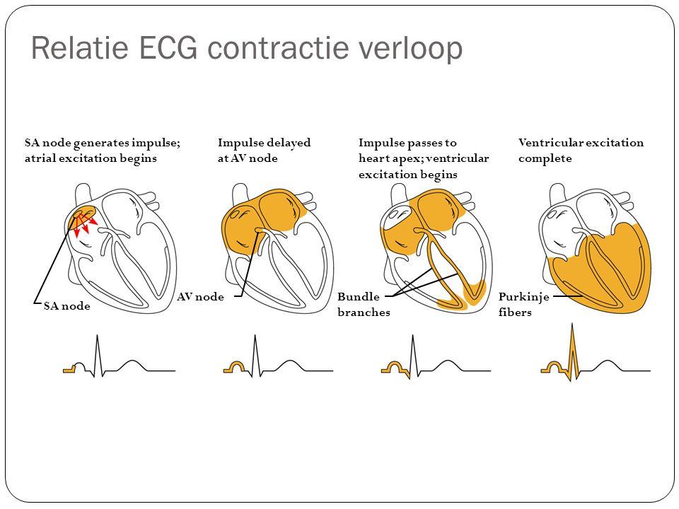 Relatie ECG contractie verloop SA node generates impulse; atrial excitation begins Impulse delayed at AV node Impulse passes to heart apex; ventricula