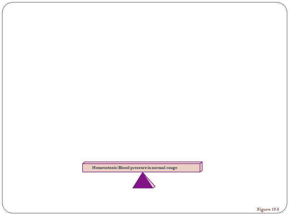 Homeostasis: Blood pressure in normal range Figure 19.8