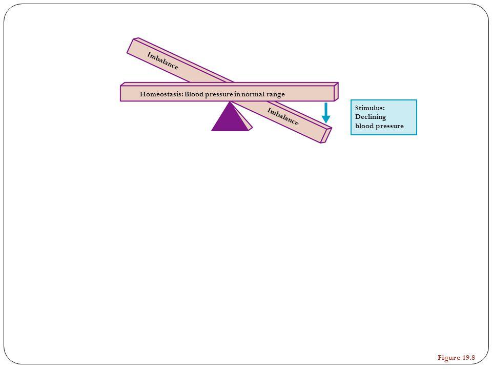 Stimulus: Declining blood pressure Homeostasis: Blood pressure in normal range Imbalance Figure 19.8