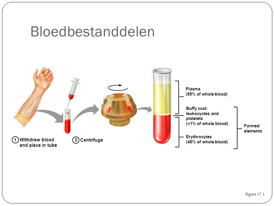 Bloedbestanddelen Figure 17.1 Withdraw blood and place in tube 1 2 Centrifuge Plasma (55% of whole blood) Formed elements Buffy coat: leukocyctes and platelets (<1% of whole blood) Erythrocytes (45% of whole blood)