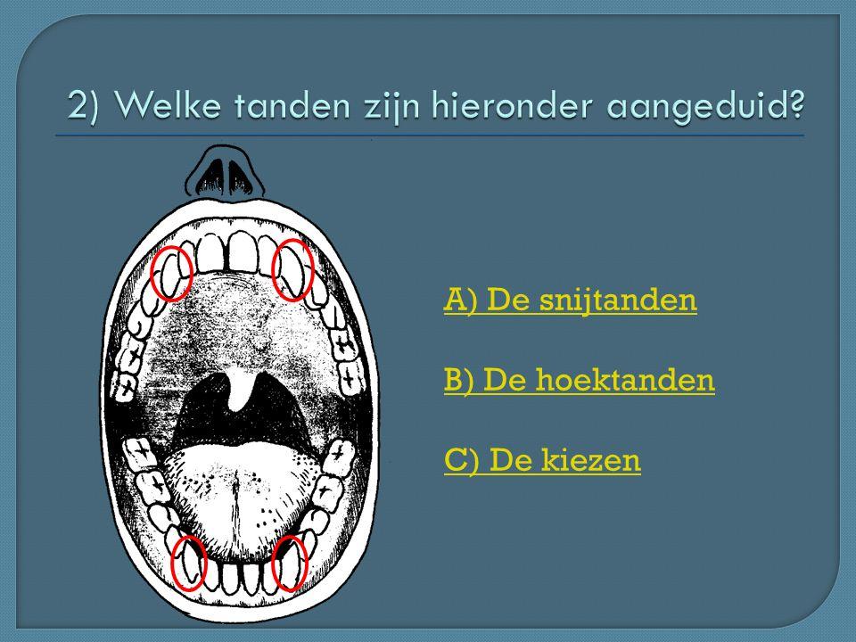 A) De snijtanden B) De hoektanden C) De kiezen