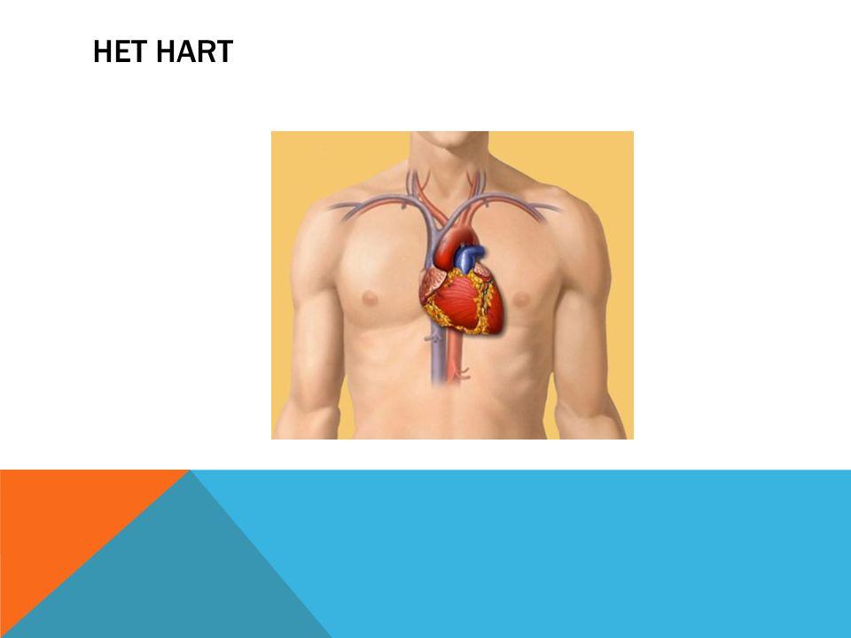 KLEPGEBREKEN  Onderzoek en behandeling: ECG en Echo Hart  Verpleegkundige zorg afhankelijk van de oorzaak