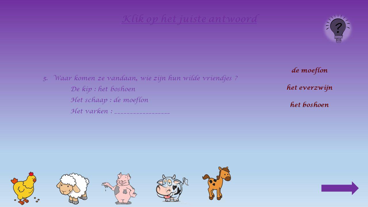 5.Waar komen ze vandaan, wie zijn hun wilde vriendjes ? De kip : het boshoen Het schaap : ________________ de moeflon het everzwijn het boshoen Klik o