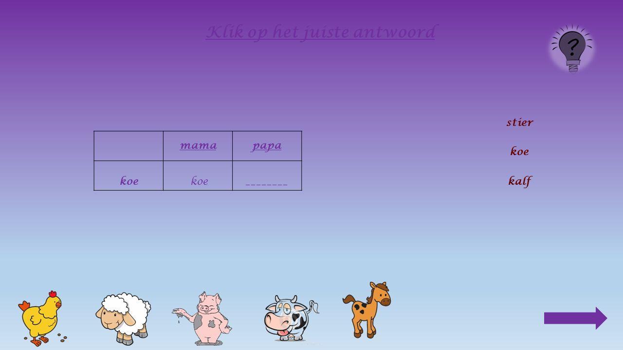 mama koe_______ Klik op het juiste antwoord stier koe kalf