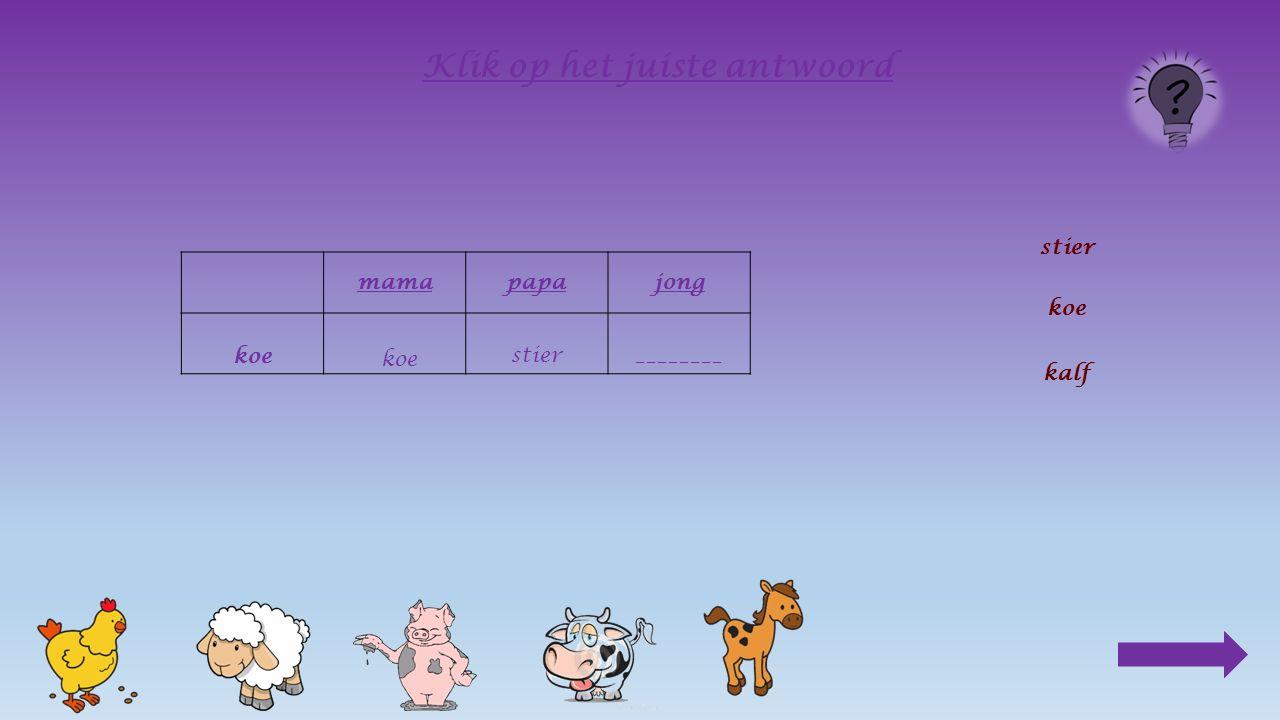 mamapapa koe________ Klik op het juiste antwoord stier koe kalfkoe
