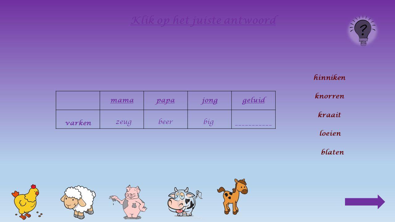 mamapapajong varken________ Klik op het juiste antwoord beer zeug big zeugbeer