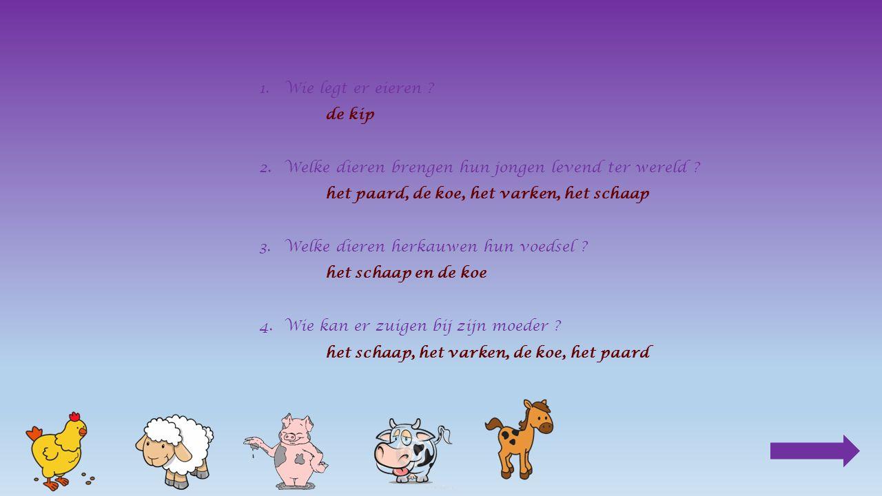 mamapapajong koe________ Klik op het juiste antwoord stier koe kalf koe stier