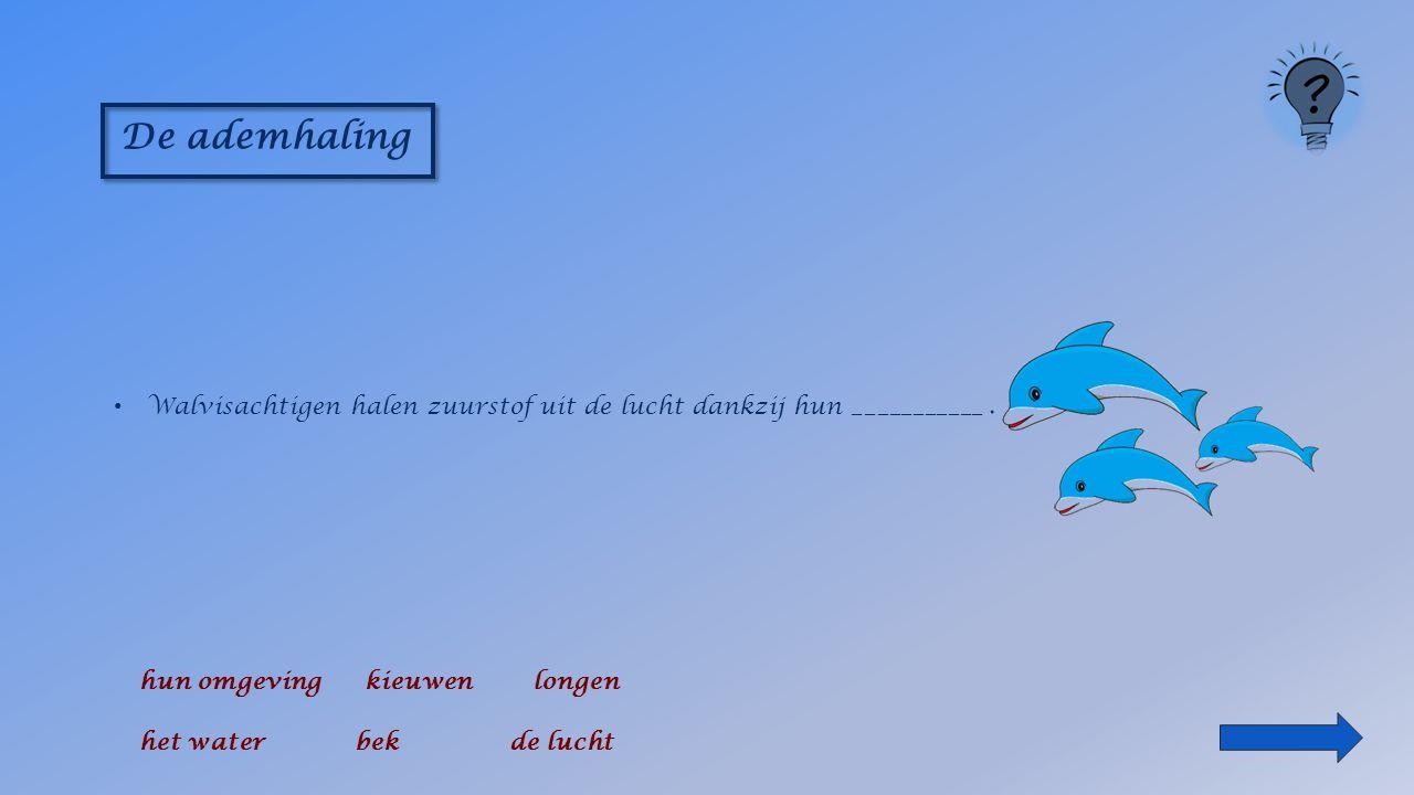 De ademhaling Walvisachtigen halen zuurstof uit _____________ hun omgeving bek longen het water kieuwen de lucht