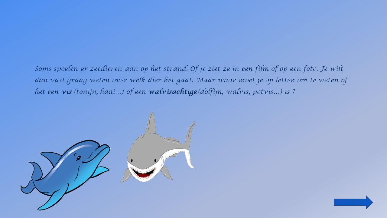 Soms spoelen er zeedieren aan op het strand.Of je ziet ze in een film of op een foto.