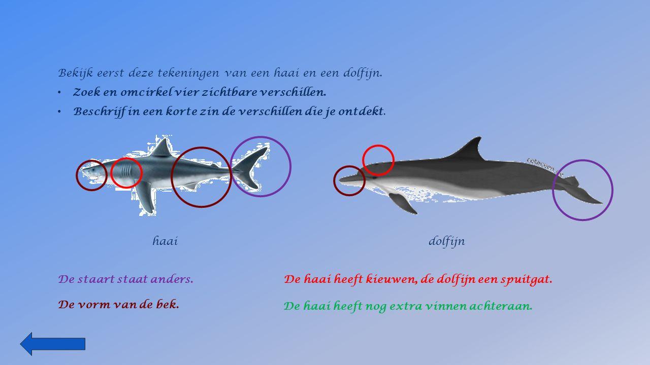Bekijk eerst deze tekeningen van een haai en een dolfijn.