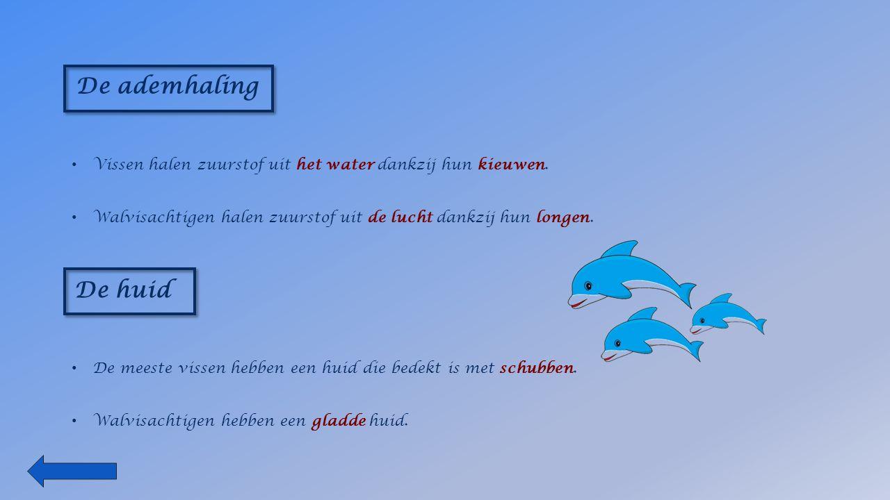 De ademhaling Vissen halen zuurstof uit het water dankzij hun kieuwen.