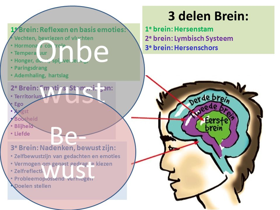 3 e Brein: Nadenken, bewust zijn: Zelfbewustzijn van gedachten en emoties Vermogen om gepast gedrag te kiezen Zelfreflectie Probleemoplossend vermogen
