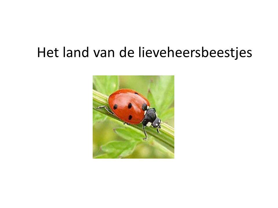 Het land van de lieveheersbeestjes
