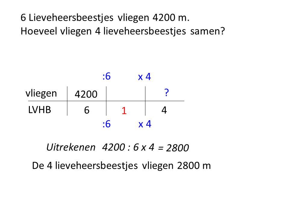 6 Lieveheersbeestjes vliegen 4200 m. Hoeveel vliegen 4 lieveheersbeestjes samen.
