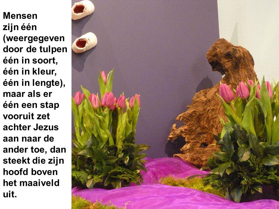 Mensen zijn één (weergegeven door de tulpen één in soort, één in kleur, één in lengte), maar als er één een stap vooruit zet achter Jezus aan naar de ander toe, dan steekt die zijn hoofd boven het maaiveld uit.