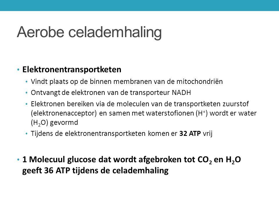 Aerobe celademhaling Elektronentransportketen Vindt plaats op de binnen membranen van de mitochondriën Ontvangt de elektronen van de transporteur NADH