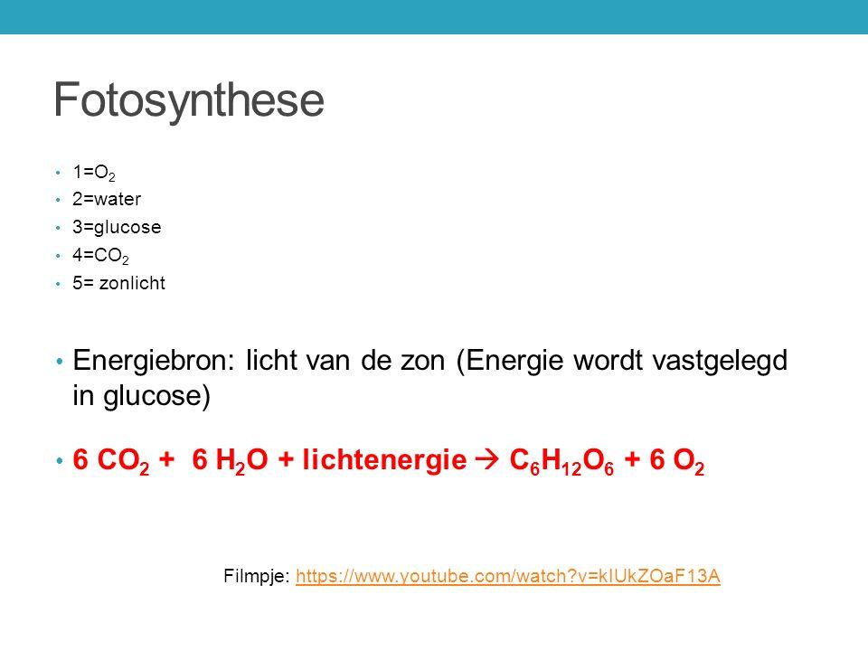 Fotosynthese 1=O 2 2=water 3=glucose 4=CO 2 5= zonlicht Energiebron: licht van de zon (Energie wordt vastgelegd in glucose) 6 CO 2 + 6 H 2 O + lichten