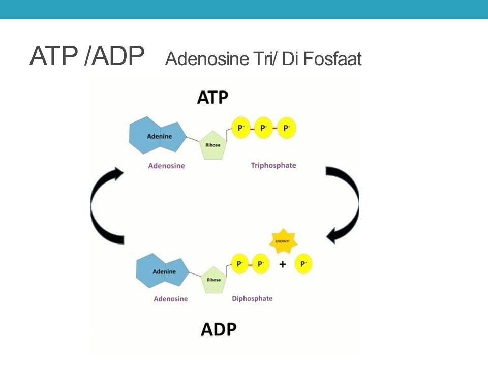 Katabolisme van andere moleculen Alle brandstoffen zijn te gebruiken om ATP te maken.